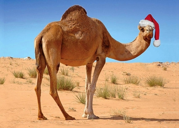 Christmas holidays in Morocco