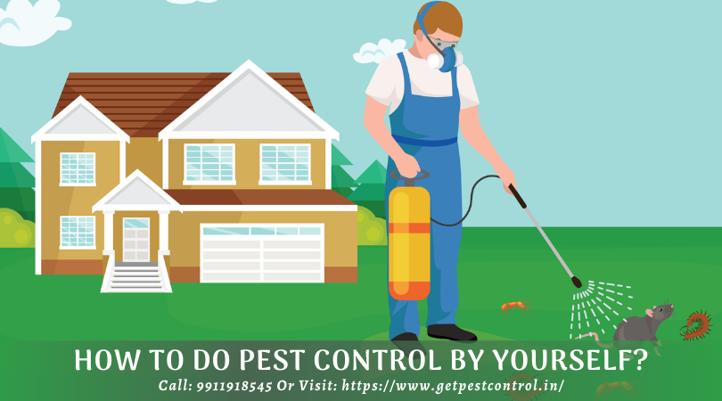 How to Do Pest Control by Yourself