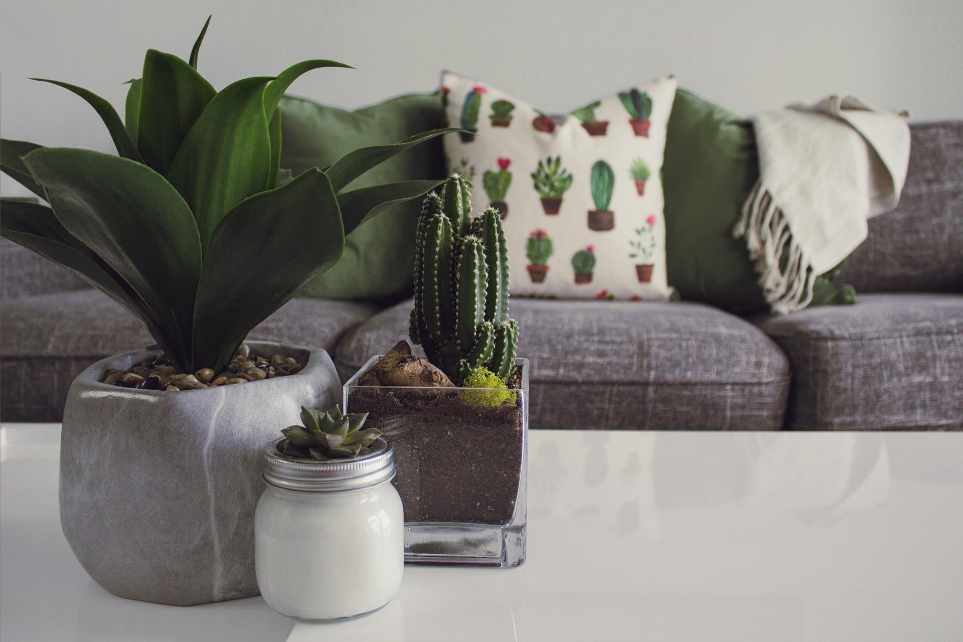 Indoor Plants in UAE